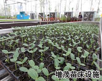 温室育苗设备